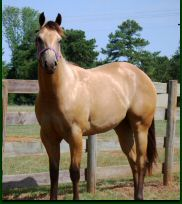teanna july yearling9.jpg